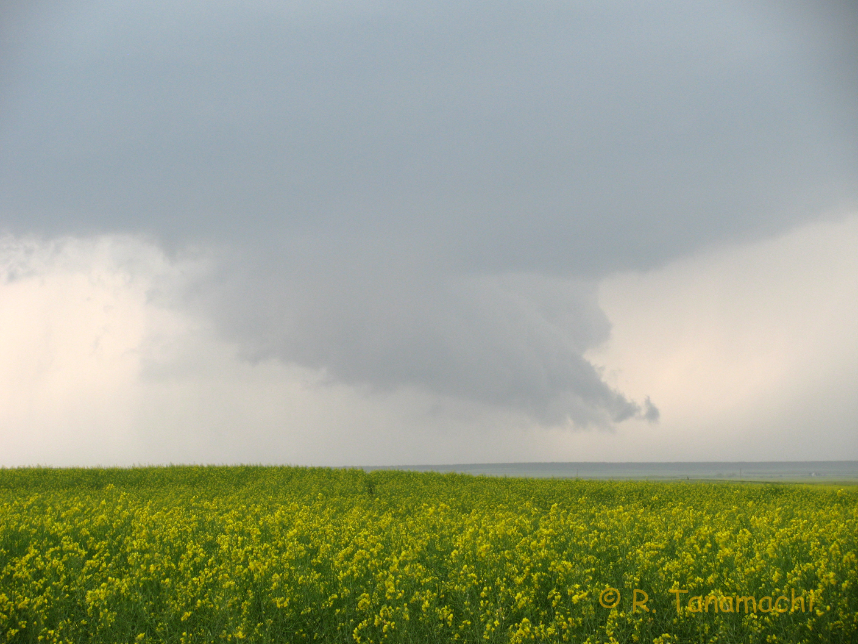 Wall cloud over broccoli fields near Victory, OK